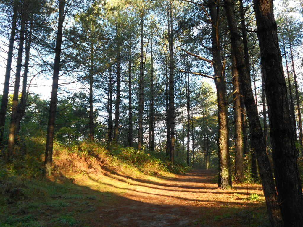 Het bos van Écault