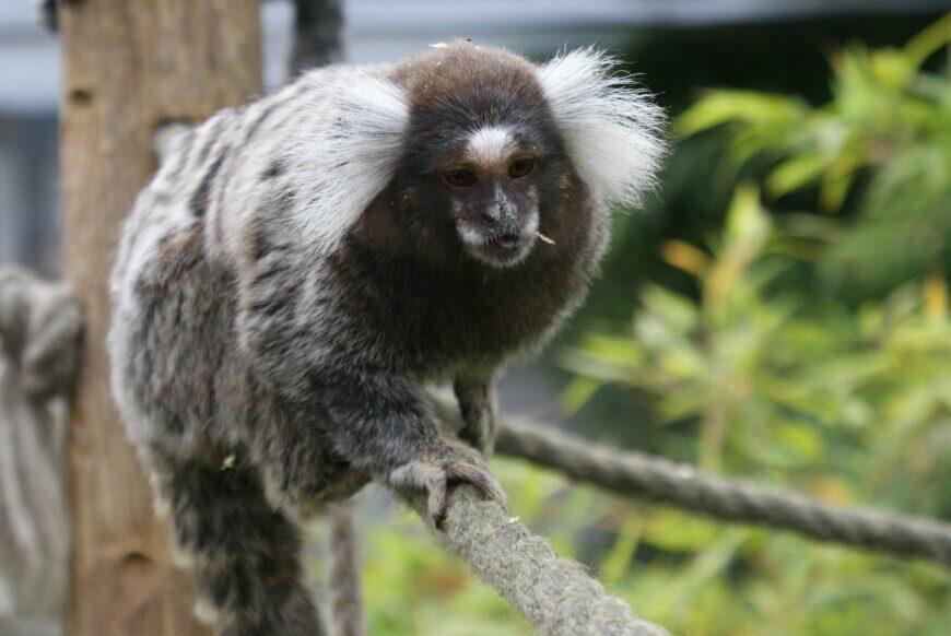 Zoo Fort-Mardyck