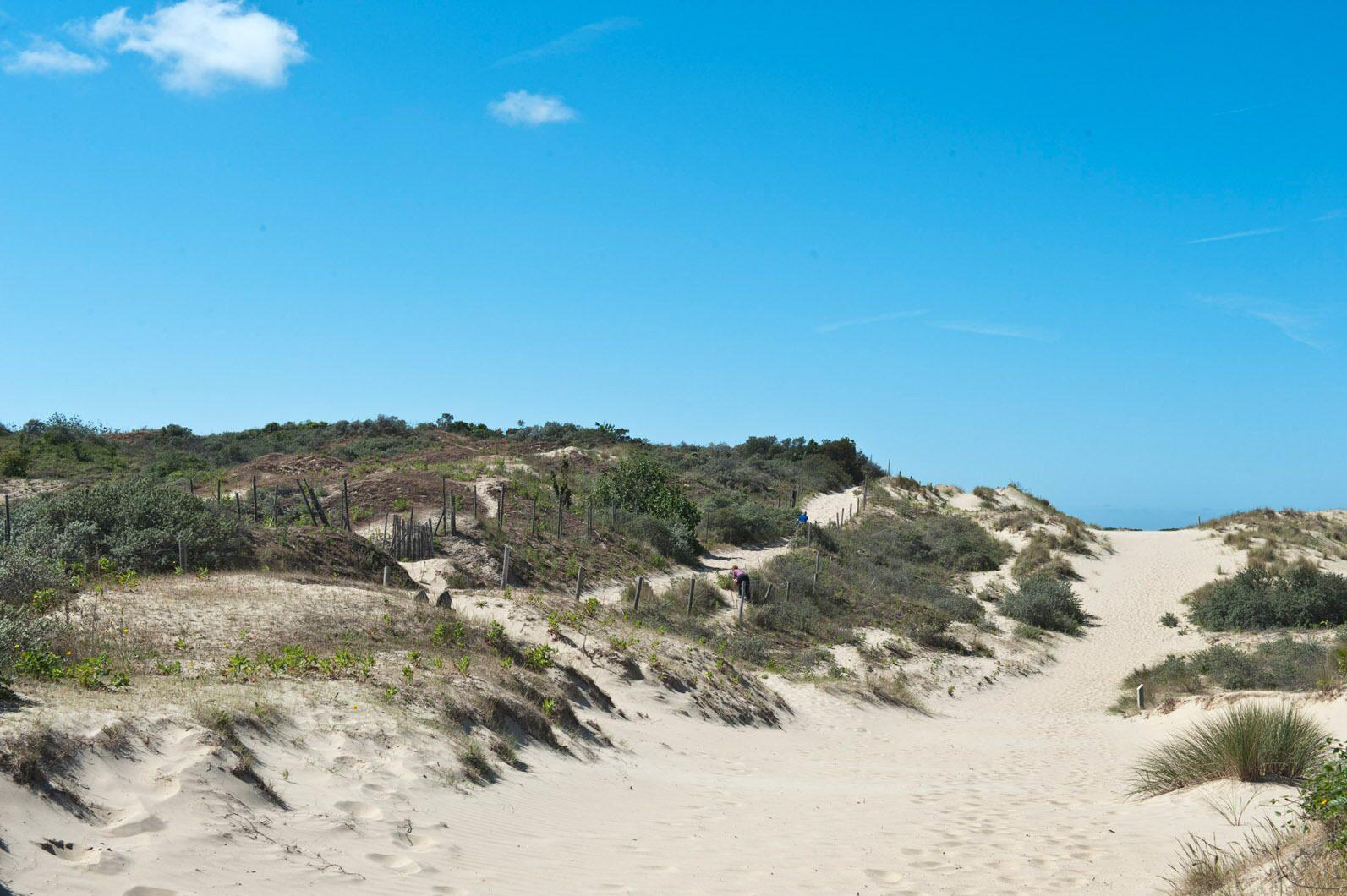 Dunes de Bray-Dunes