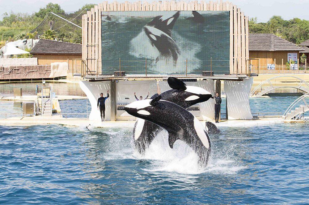 Visiter le parc animalier Marineland d'Antibes