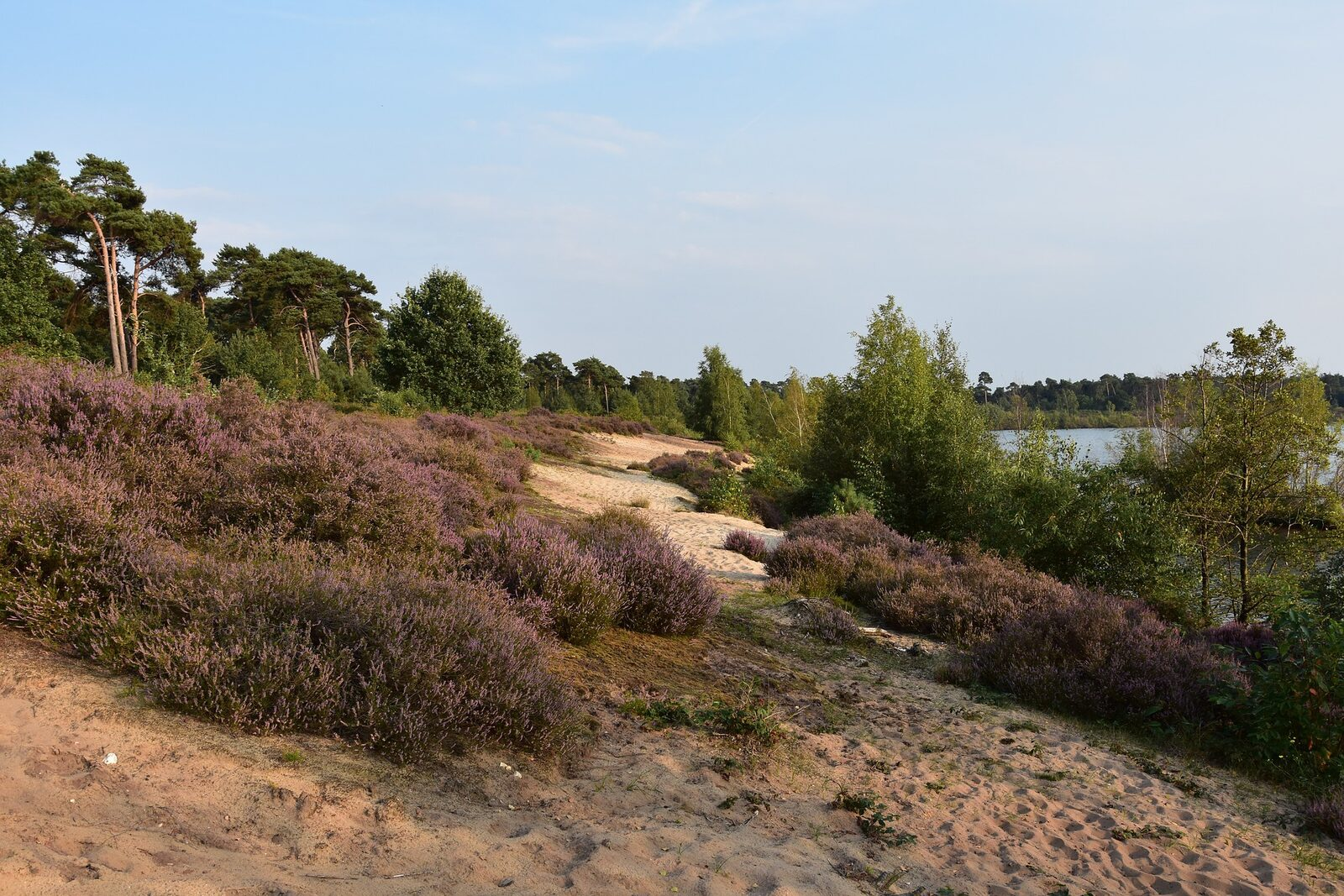 Nationalpark De Maasduinen