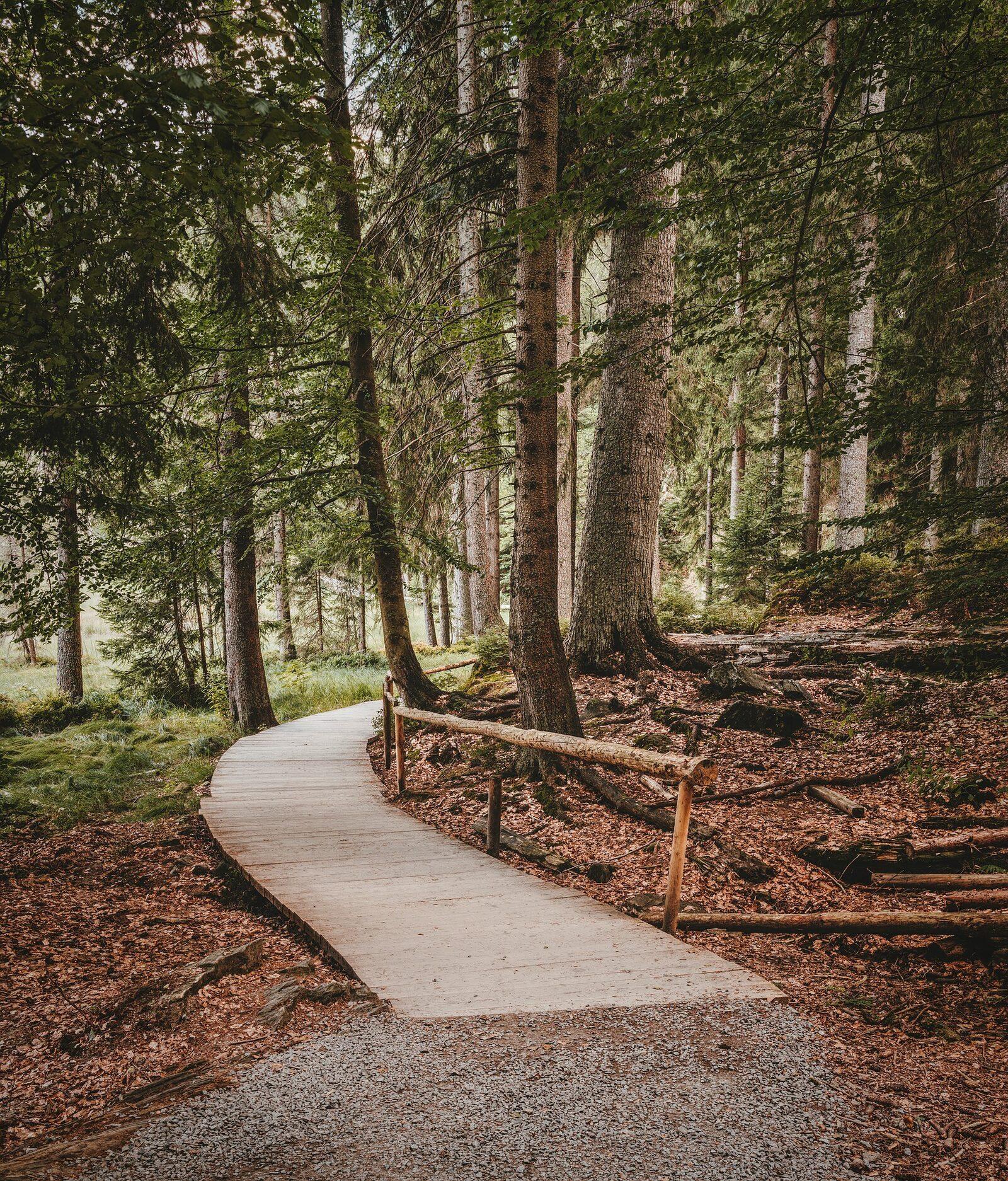 Bare feet path in Fryslân