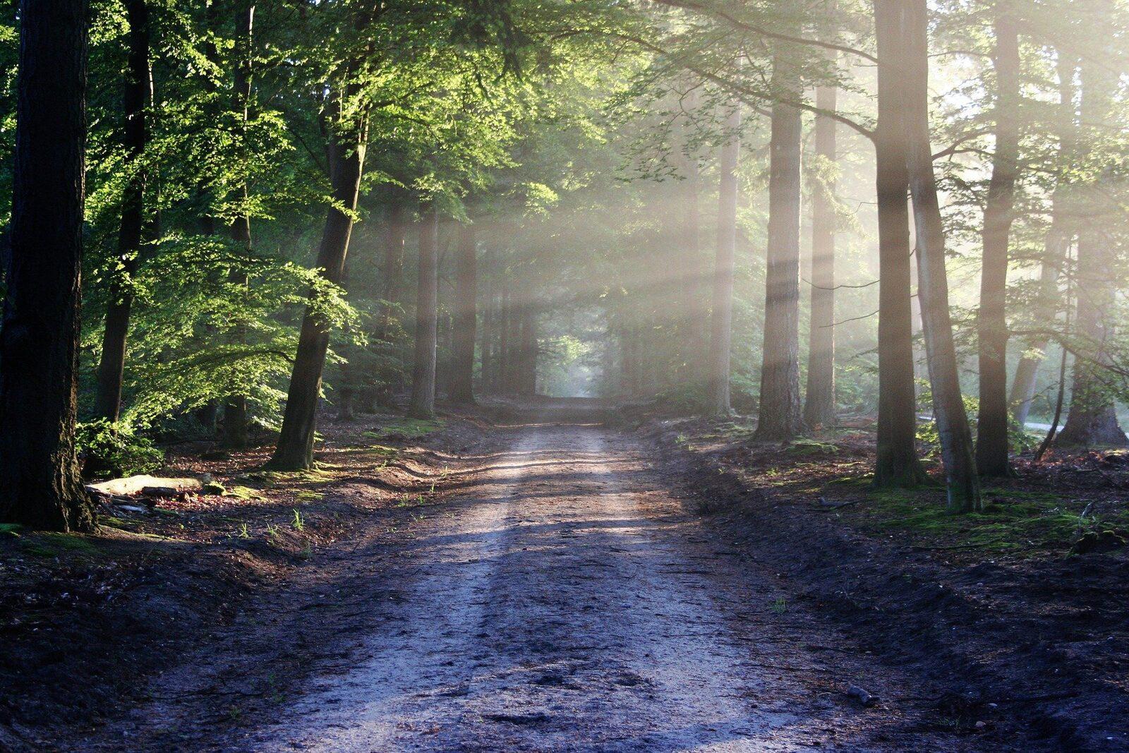 National Park De Alde Feanen
