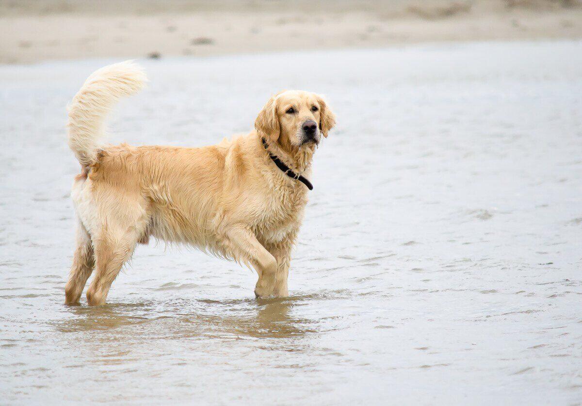 Vakantie Zoutelande met hond