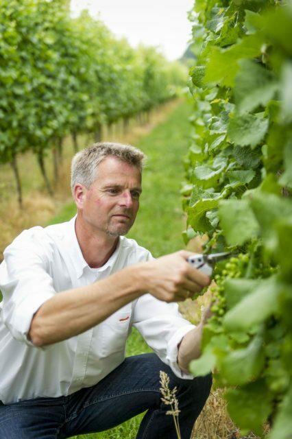 🍷 Wijngaard Telgt