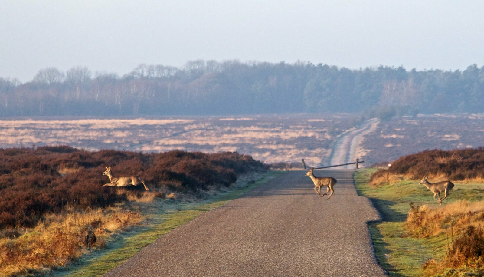 🌳 Beautiful nature at the Hoge Veluwe National Park
