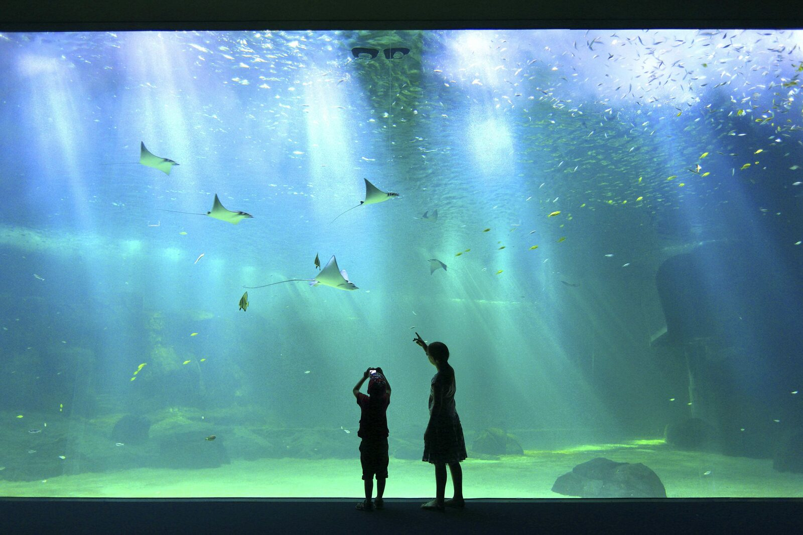 Discover the biggest aquarium in Europe
