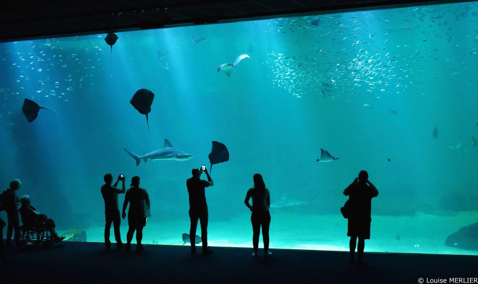 Visitez l'aquarium de Nausicaa