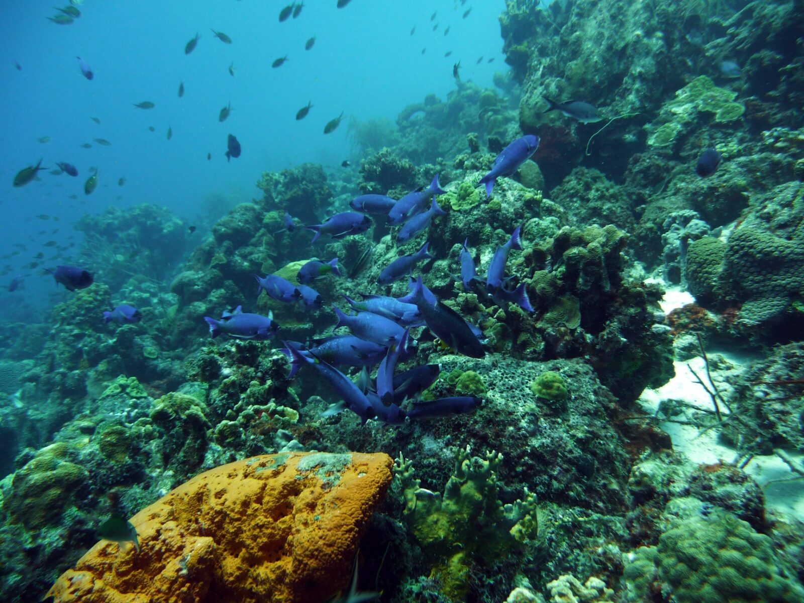 Top 5 dive and snorkel spots near Oasis Coral Estate