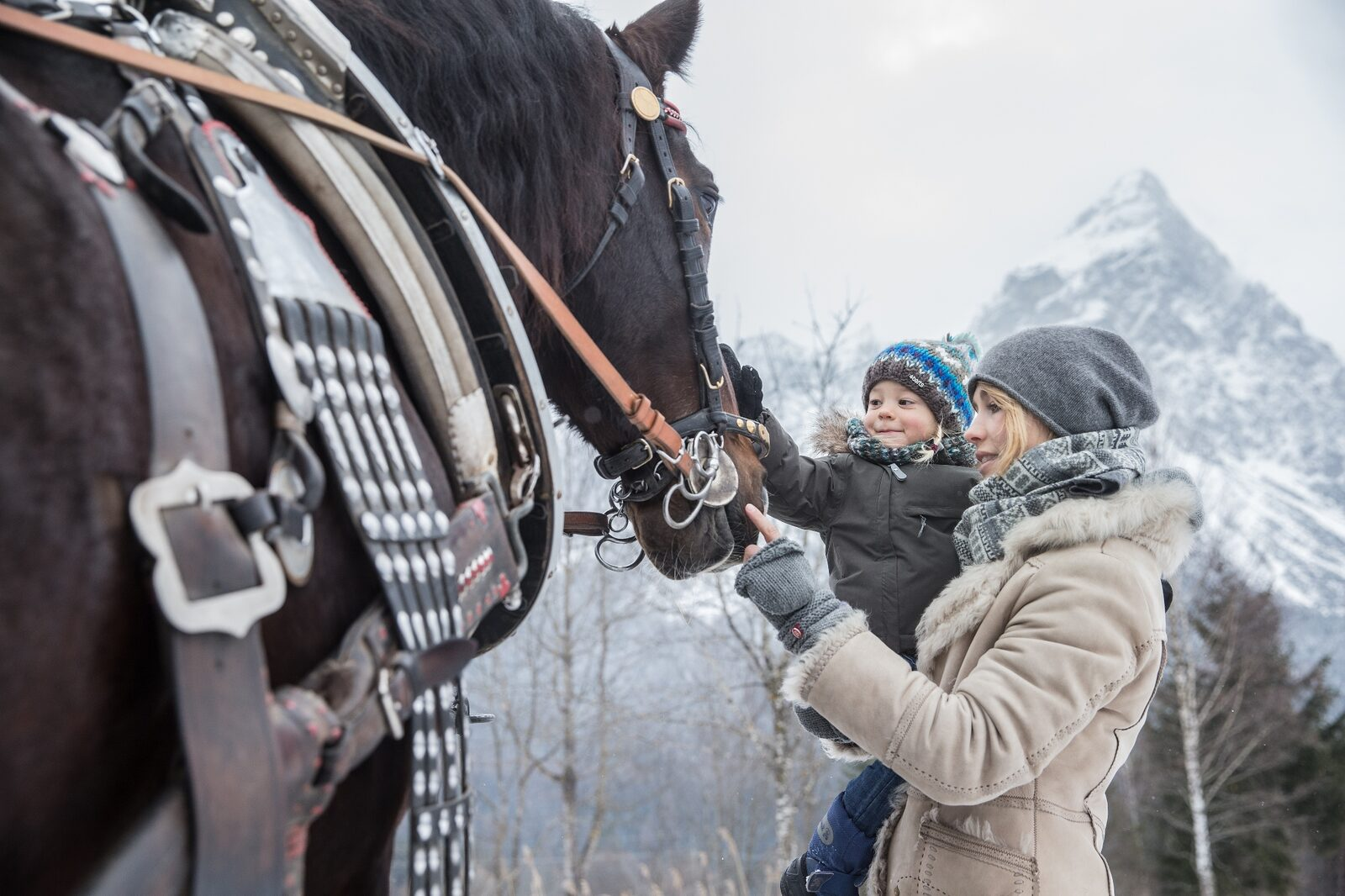 Horse sleigh ride through nature