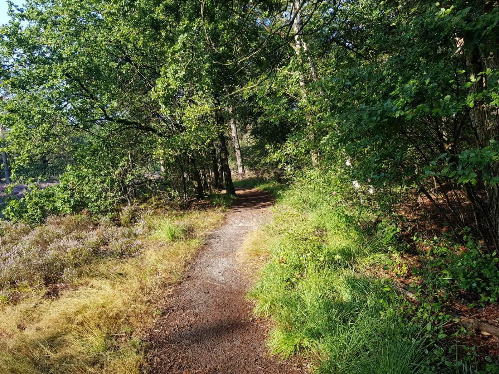 Natuurlijke camping Drenthe
