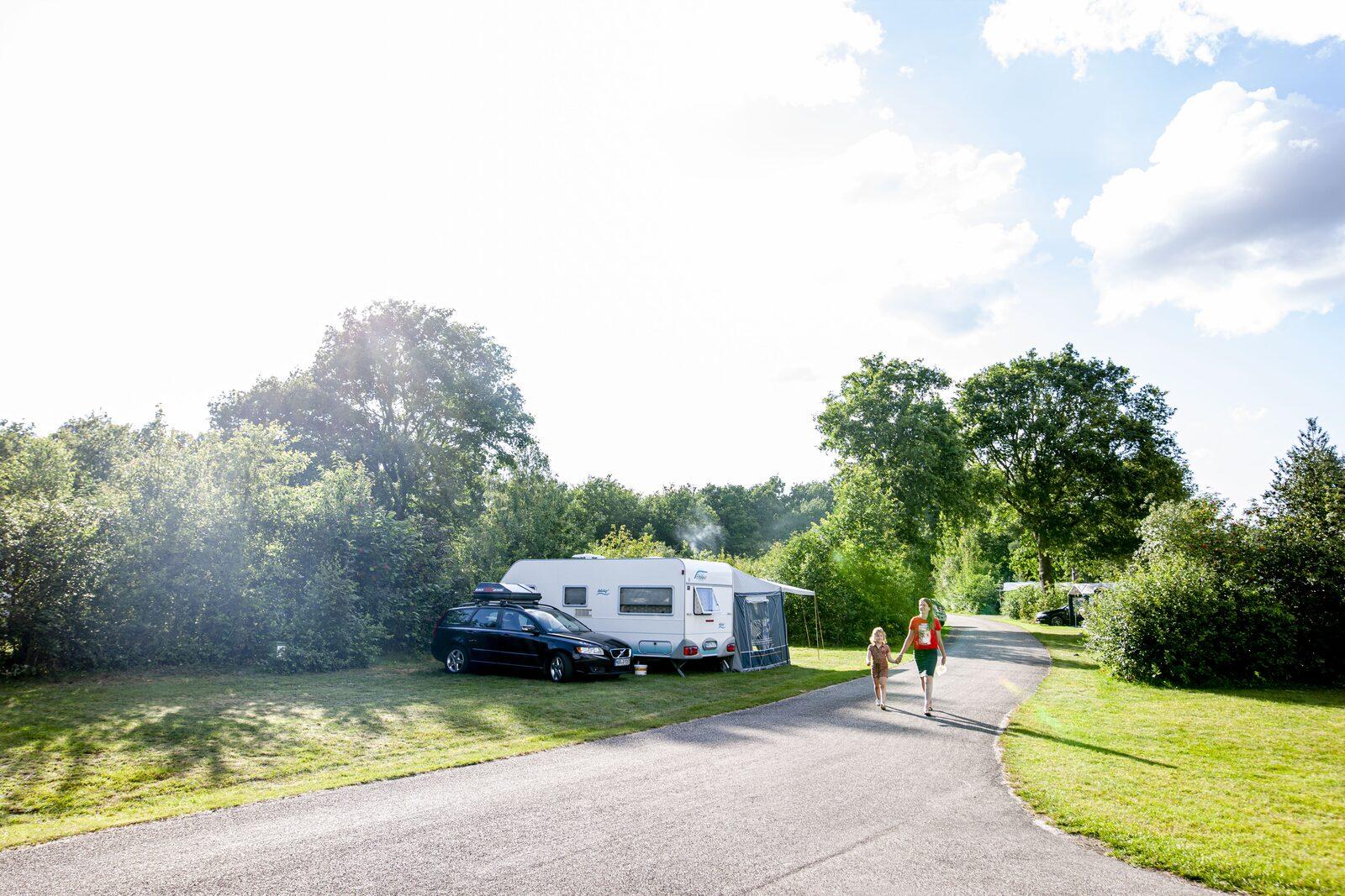 Kamperen Vakantiepark Witterzomer Schapenveld
