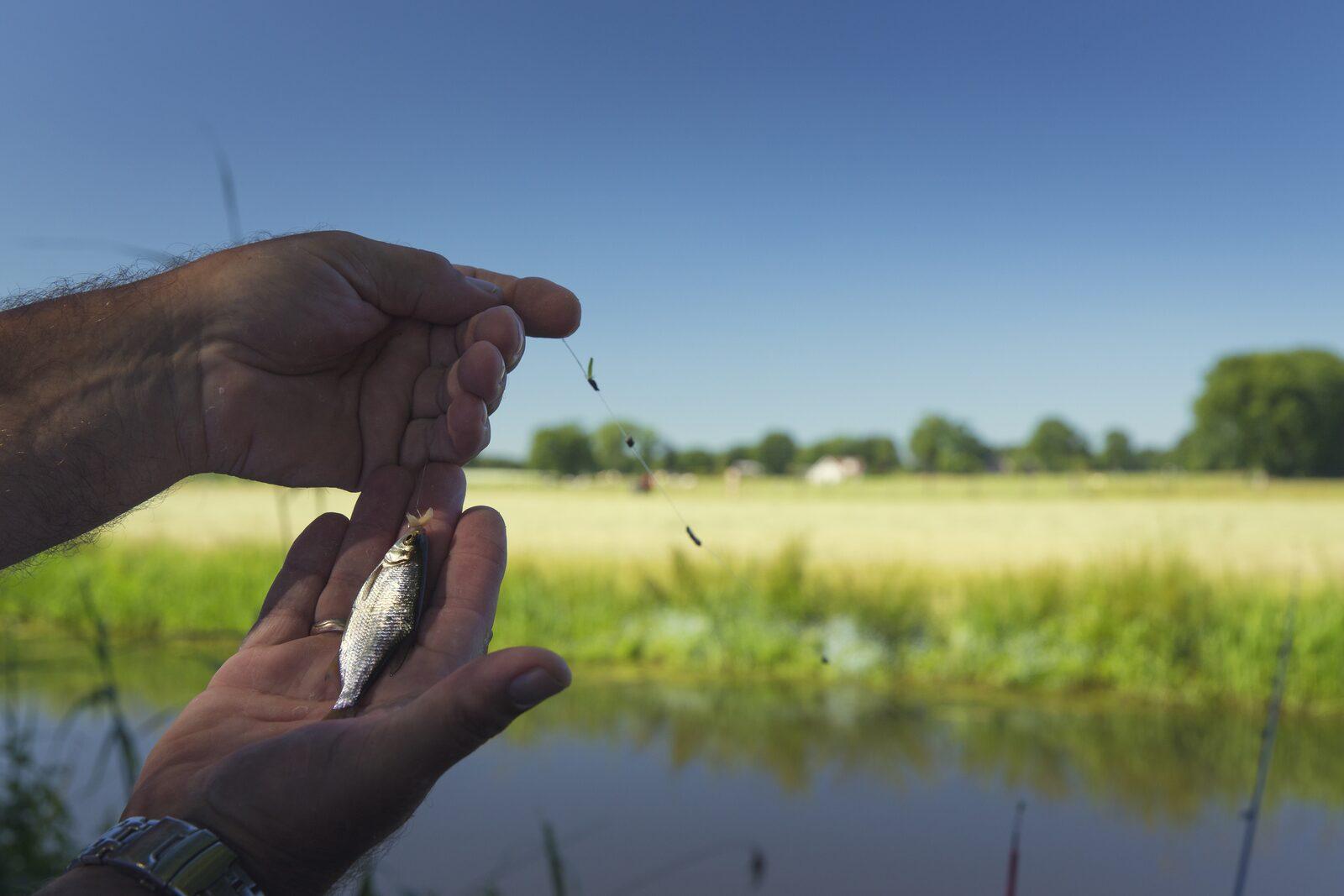 Tips voor forelvissen in Twente