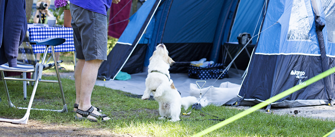 Campsite Overijssel with dog