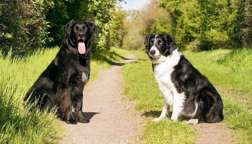 Camping met hond Nederland