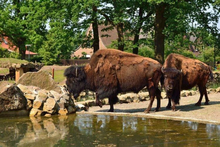 Dierenpark Nordhorn