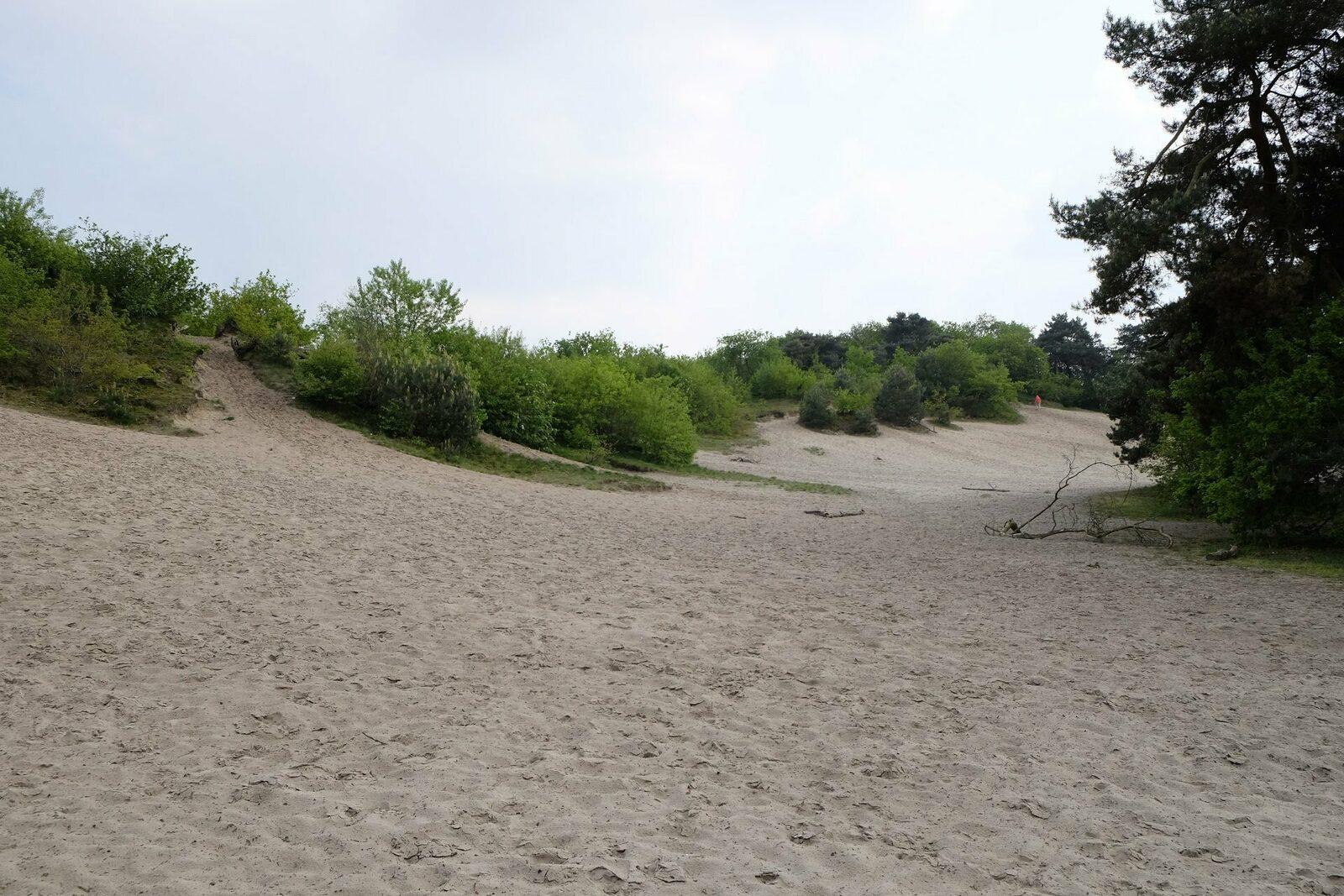 Zandverstuiving de Rheezerbelten