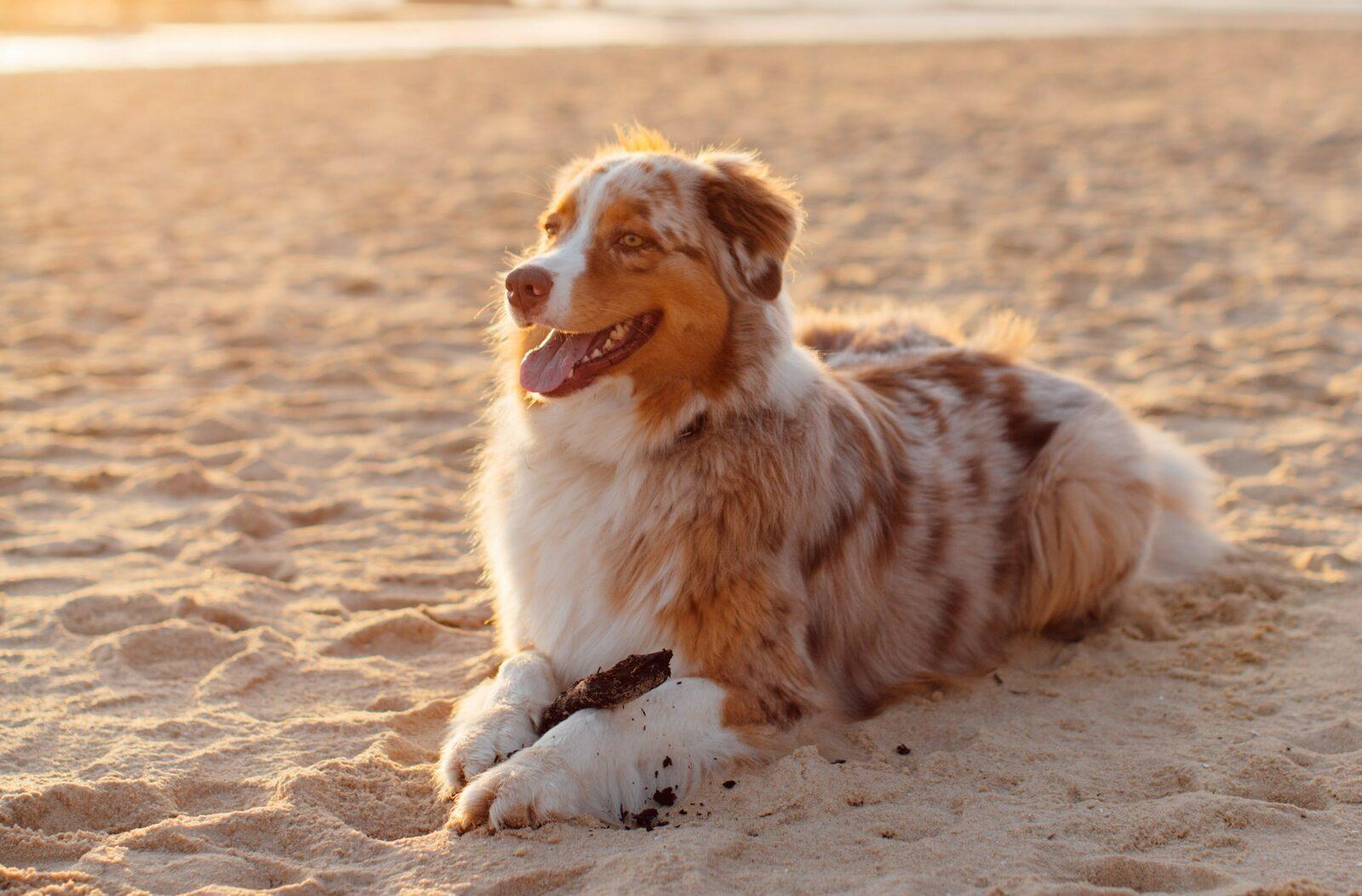 Locations de vacances avec chien sur la Côte d'Opale