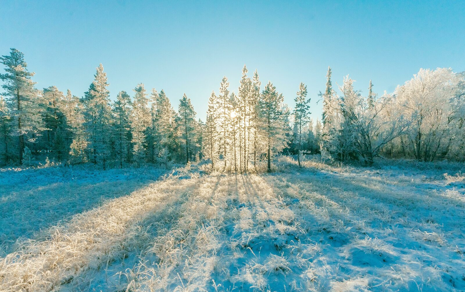 Natuurpark in winter