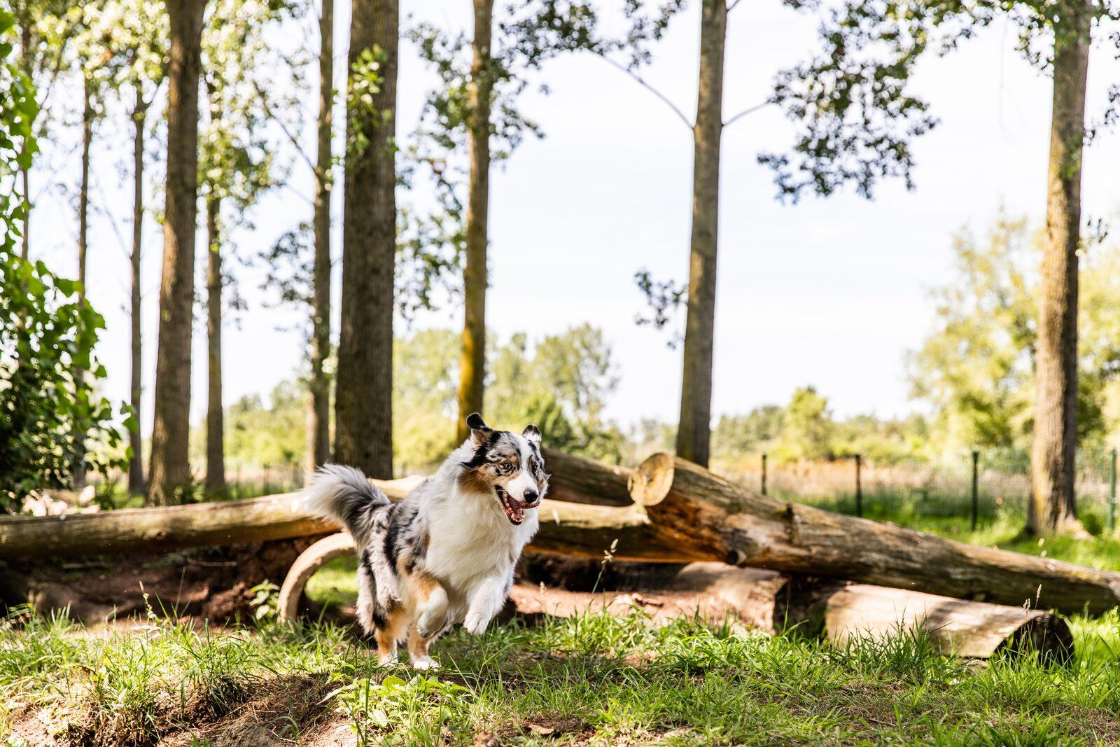 Ferienhaus in Süd-Limburg mit Hund