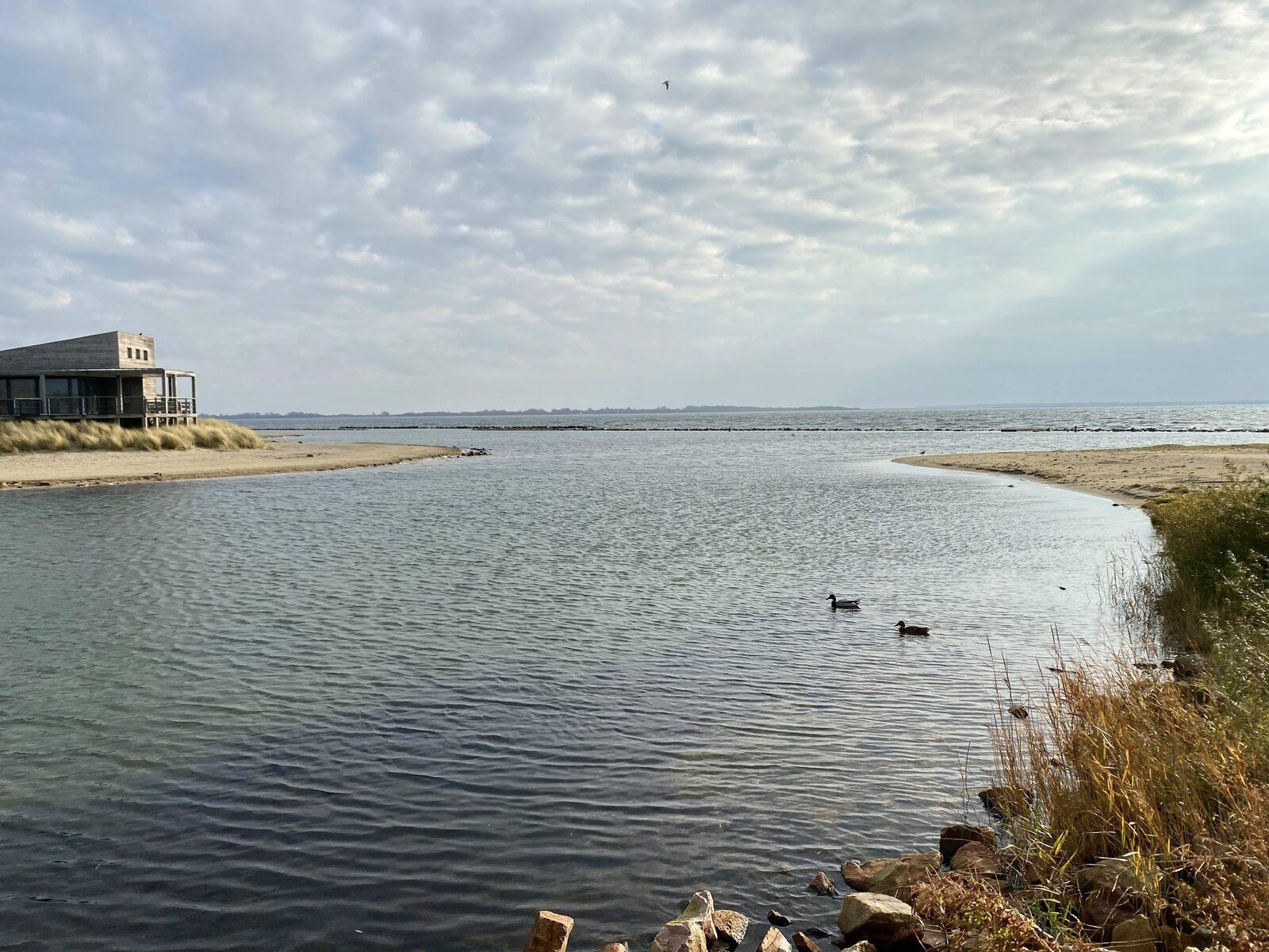 Muriel | ''Wandelen over het strand met ons hondje...''