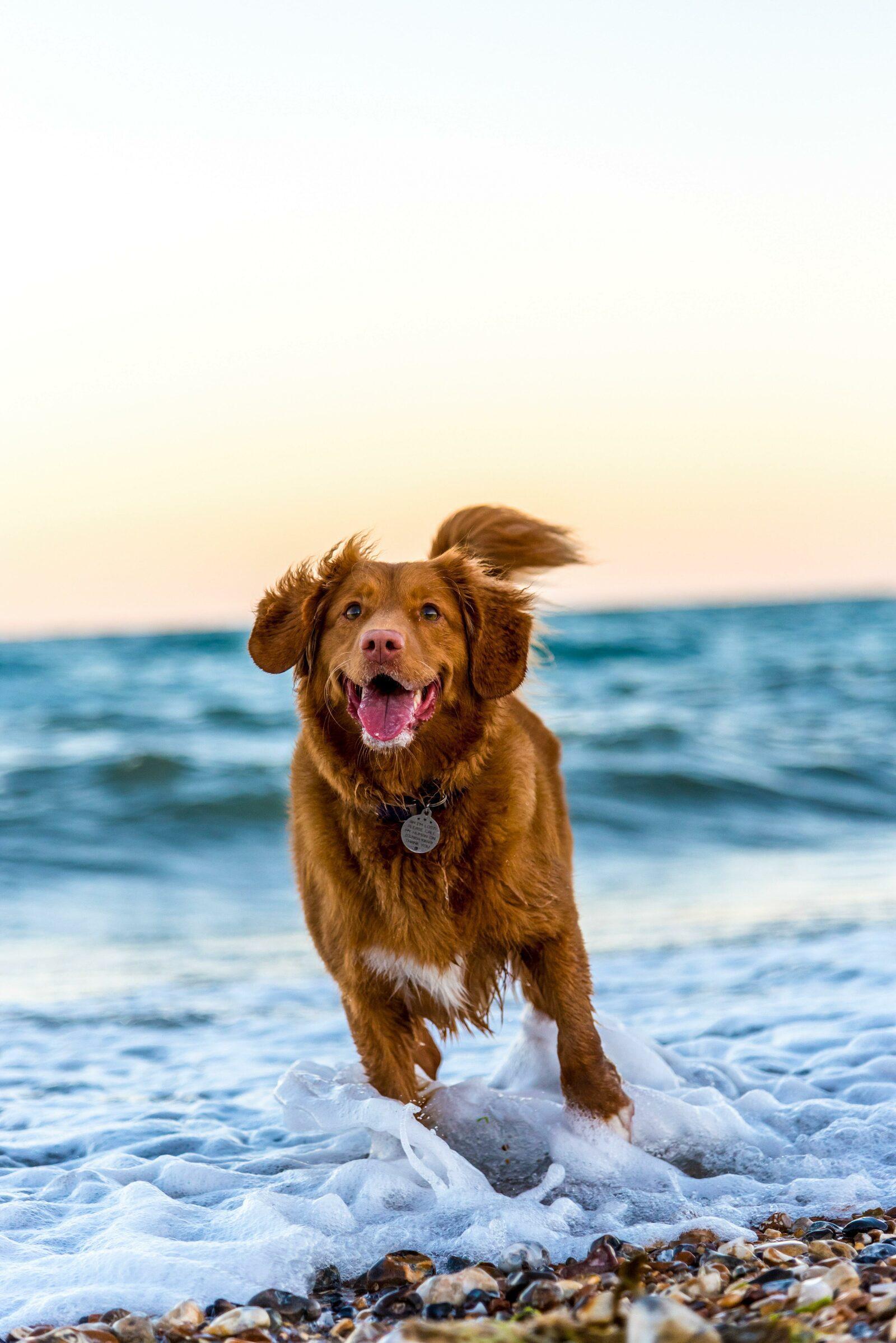 Chien sur la plage en vacances
